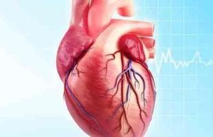 """علماء ألمان: القلب يمتلك حاسة """"الشم"""""""