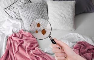 4 نصائح للتخلص من بق الفراش المزعج