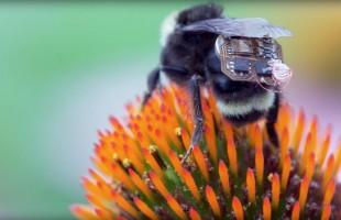 النوم مع النحل... طريقة جديدة لعلاج آلام الظهر