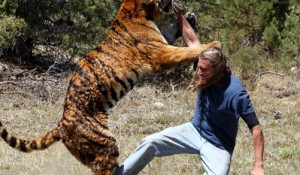 بالفيديو..نمر يهاجم رجلا حاول التقاط صورة له