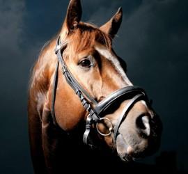 """موسوعة """"غينيس"""" تعثر على أصغر حصان في العالم.. كيف يبدو؟"""