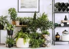 مجموعة نصائح للاعتناء بالنباتات المنزلية