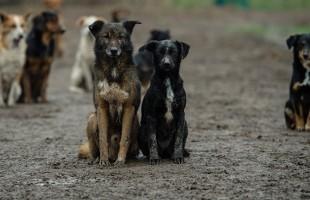 بعضها تحمله الكلاب… أخطر 3 أمراض تصيب الحيوانات والبشر