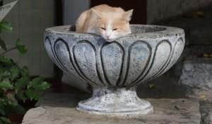 فيديو لأصغر قطة في العالم
